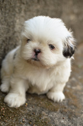 Cossyimages Puppy (55).jpeg