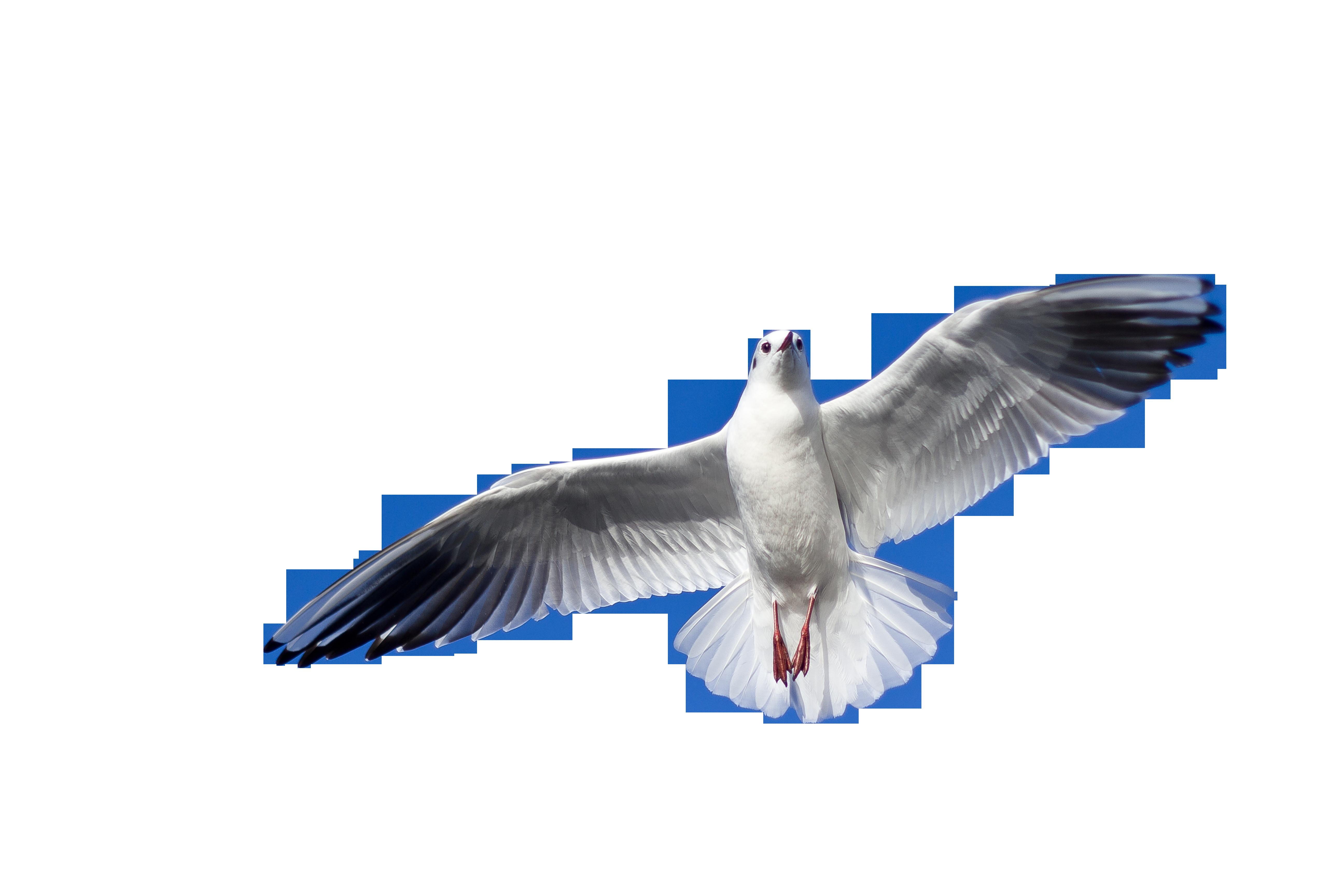 seagull-1149576_Clip