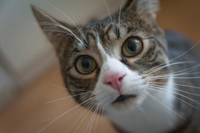 Cossyimages Kitten (12).jpeg