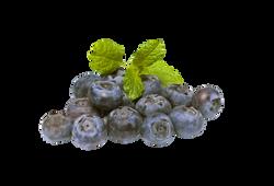 blueberries-894839_Clip