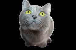 cat-351926_Clip