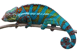 PNG images Animals