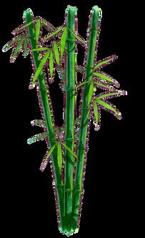Bamboo (20).png