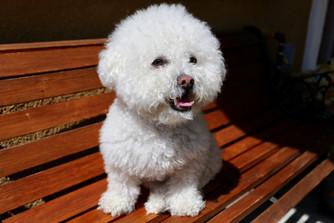 Cossyimages Puppy (27).jpg