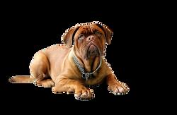 dog-734688_Clip
