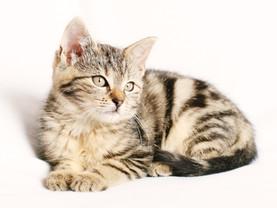 Cossyimages Kitten (12).jpg