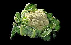 cauliflower-74221_Clip