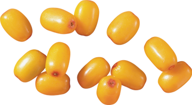Sea-buckthorn PNG images