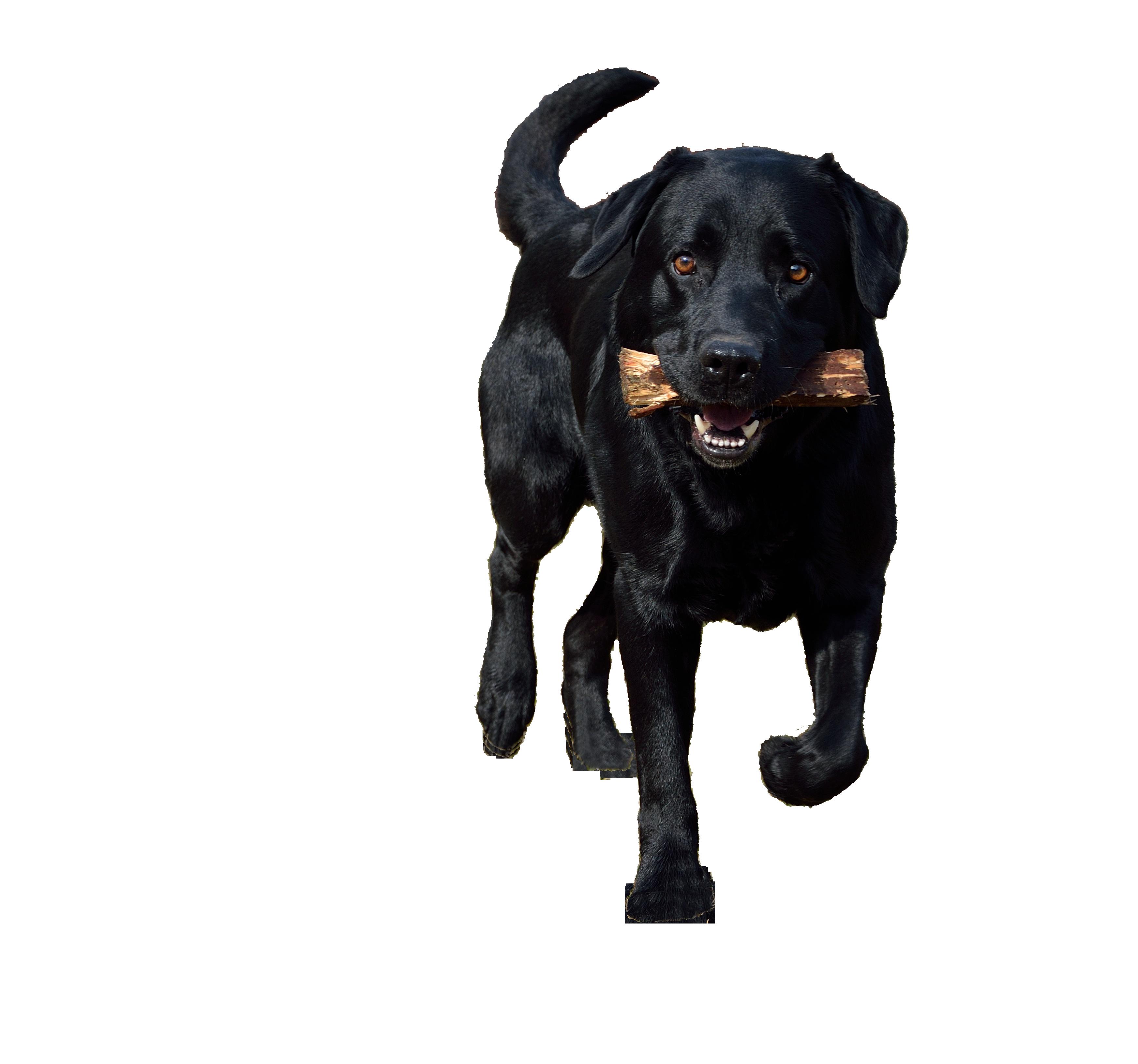 dog-666264_Clip