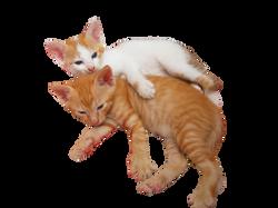cats-88151_Clip