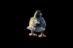 duck-931872_Clip