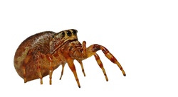 spider-562114_Clip