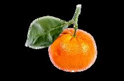 mandarin-315499_Clip