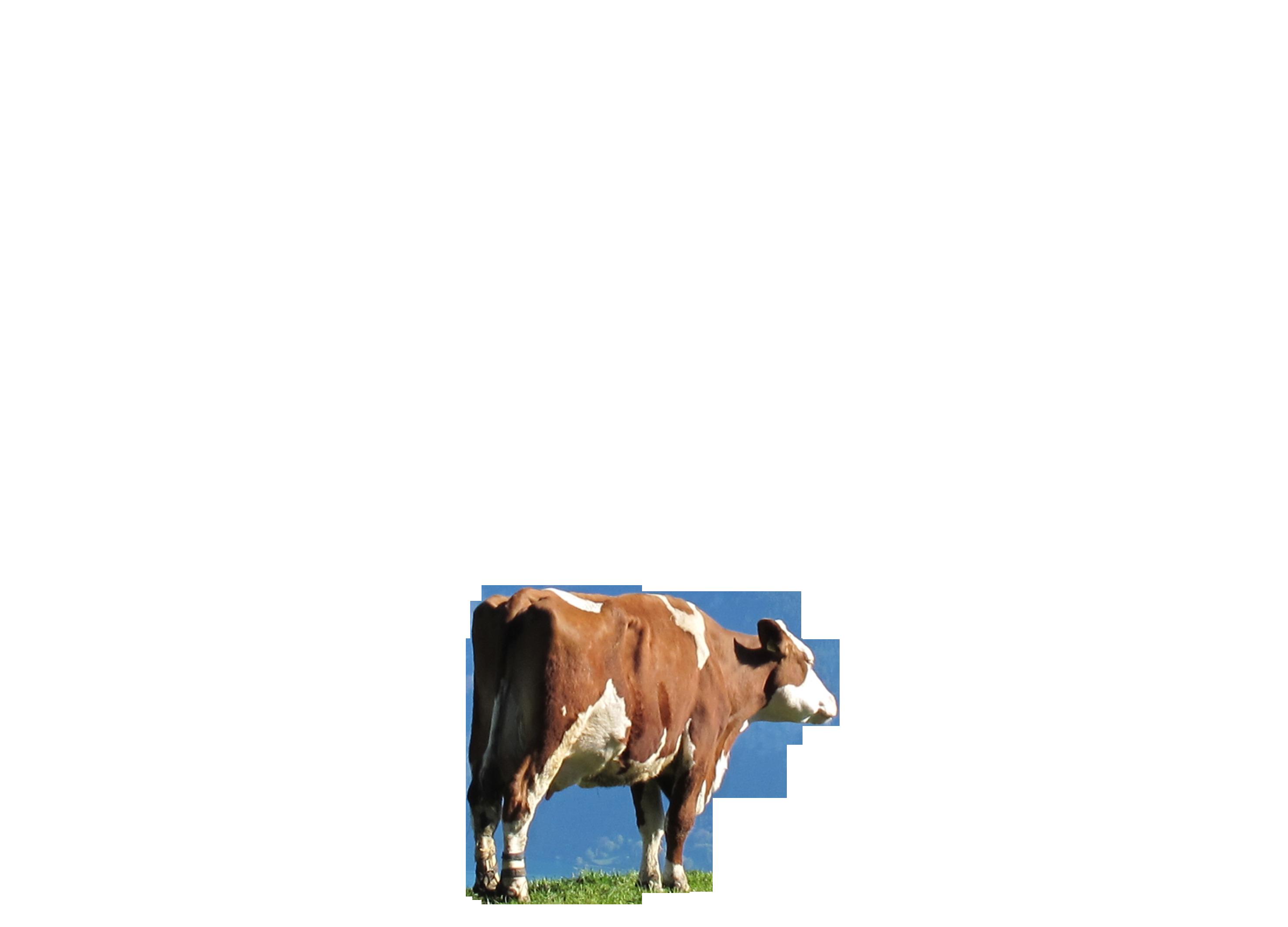 cow-342611_Clip
