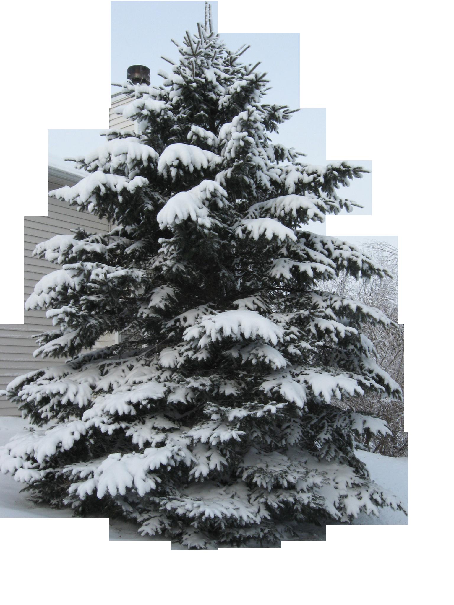 tree-960117_Clip