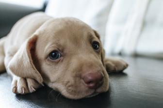 Cossyimages Puppy (25).jpg