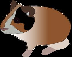 Machovka_guinea_pig