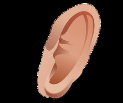 Ear transparent images