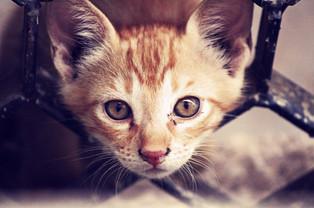 Cossyimages Kitten (25).jpeg