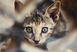 Cossyimages Kitten (36).jpeg