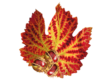 autumn-2532350_960_720.png