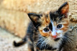 Cossyimages Kitten (5).jpg