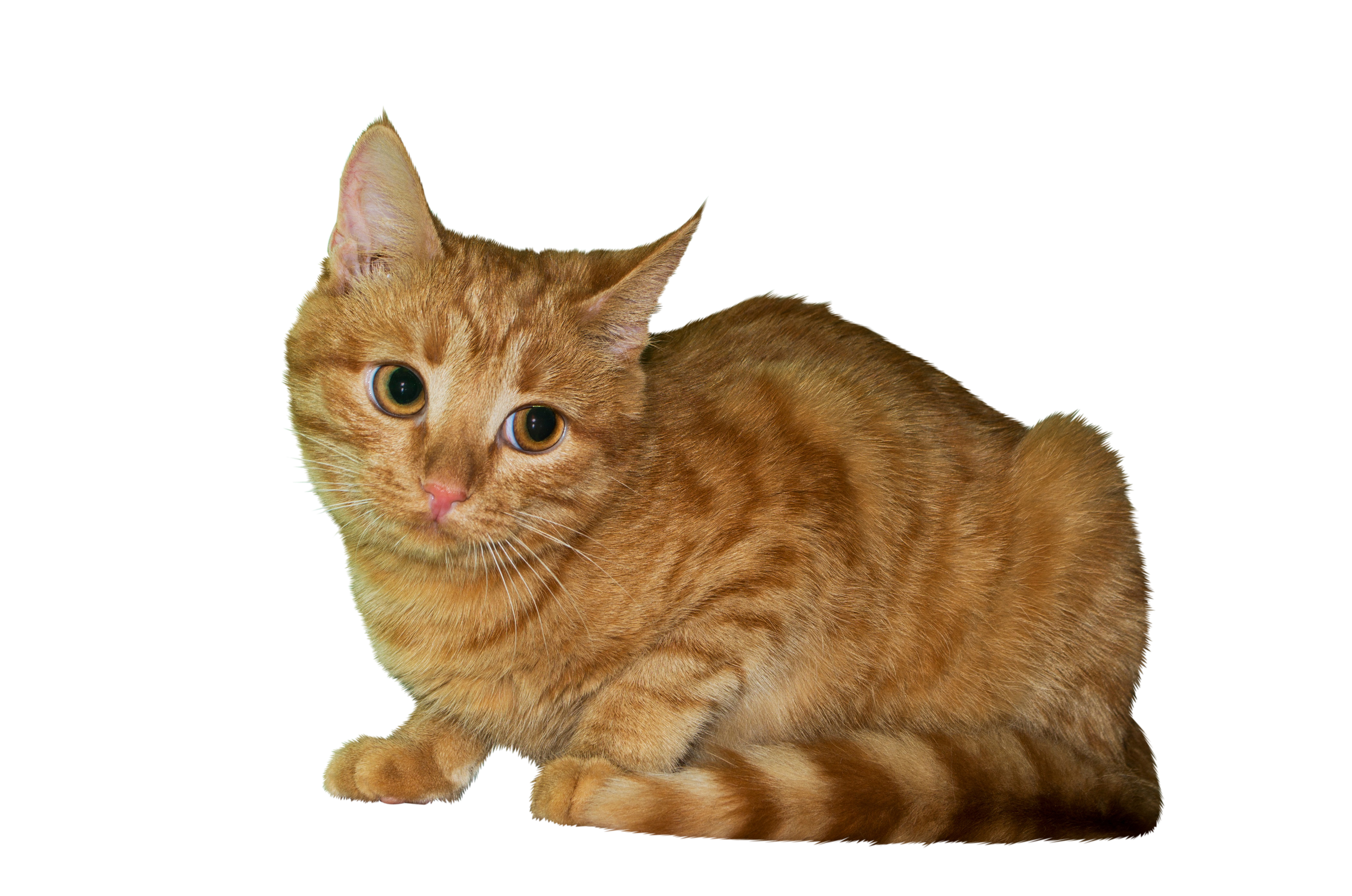 cat-1090577_Clip