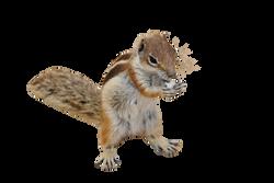 chipmunk-270288_Clip