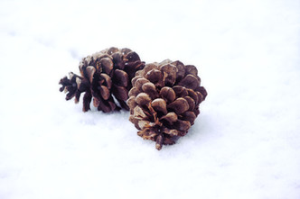 Cossyimages Winter (90).jpg