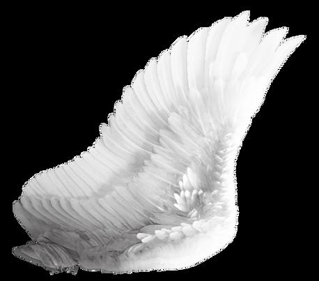 Wings-png-11