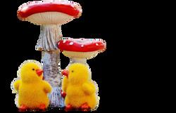 chicks-1176197_Clip