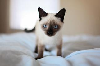 Cossyimages Kitten (17).jpeg