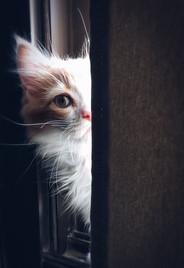 Cossyimages Kitten (1).jpeg