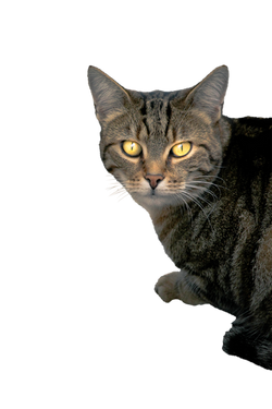 cat-1165644_Clip