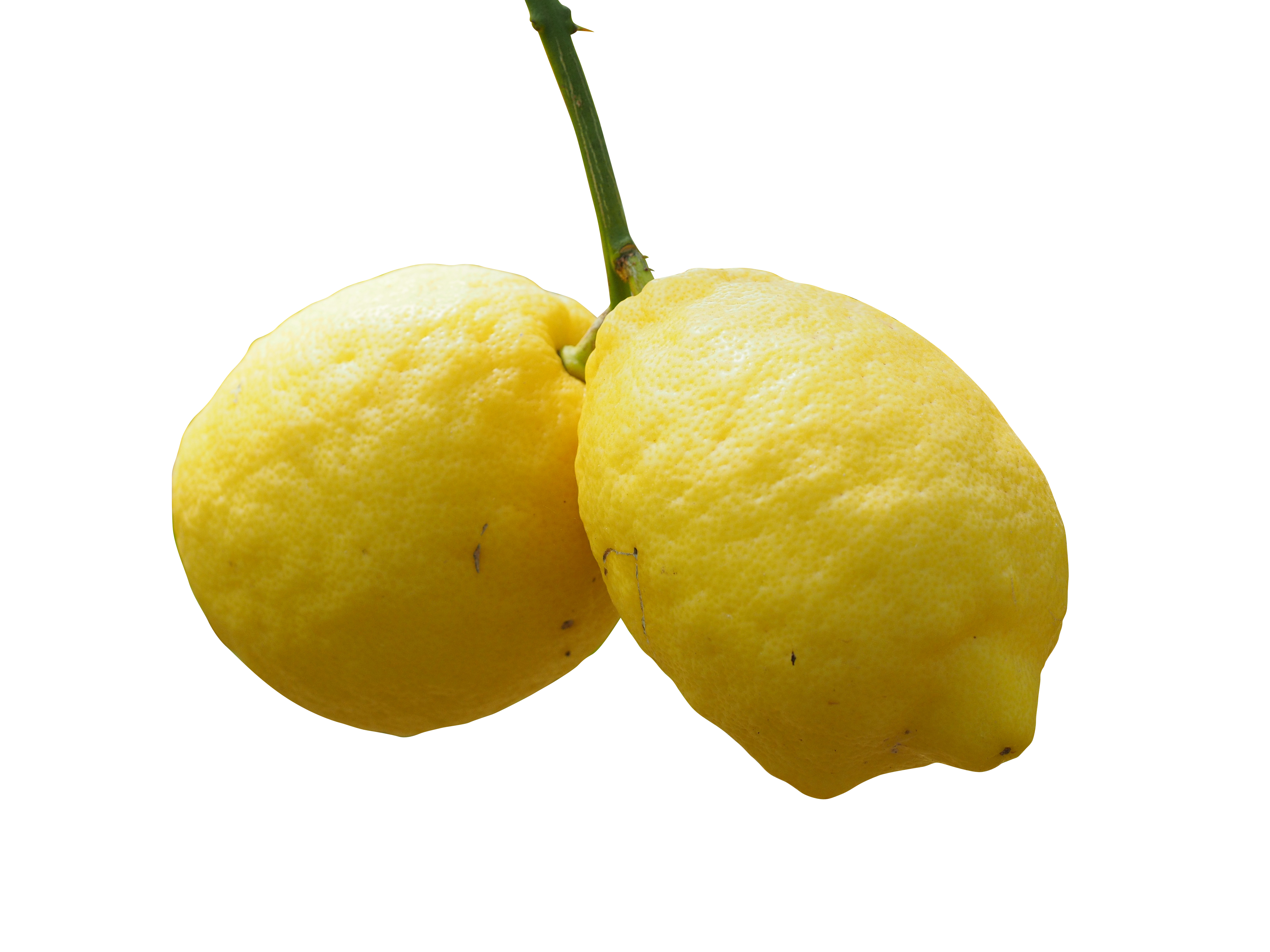 lemon-1117562_Clip