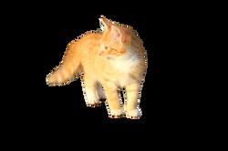 cat-1074791_Clip