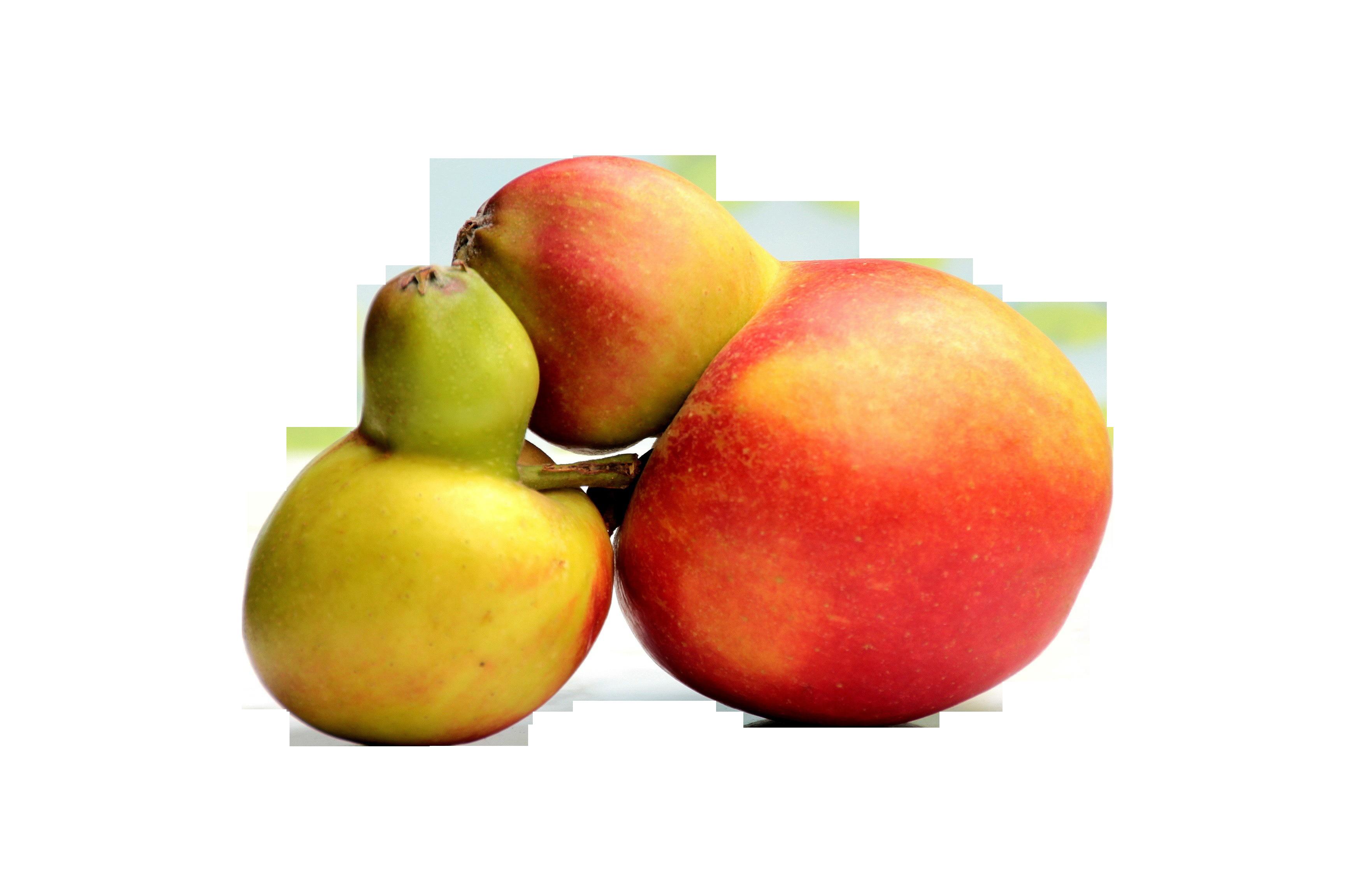 fruit-741172_Clip