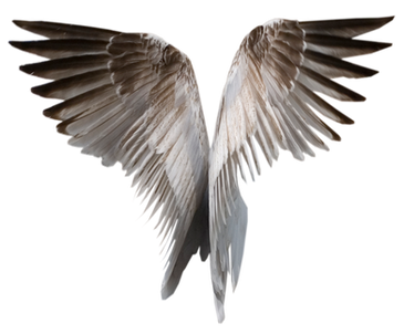Wing-png-06