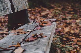 Cossyimages Autumn (36).jpg