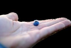 blueberry-691625_Clip