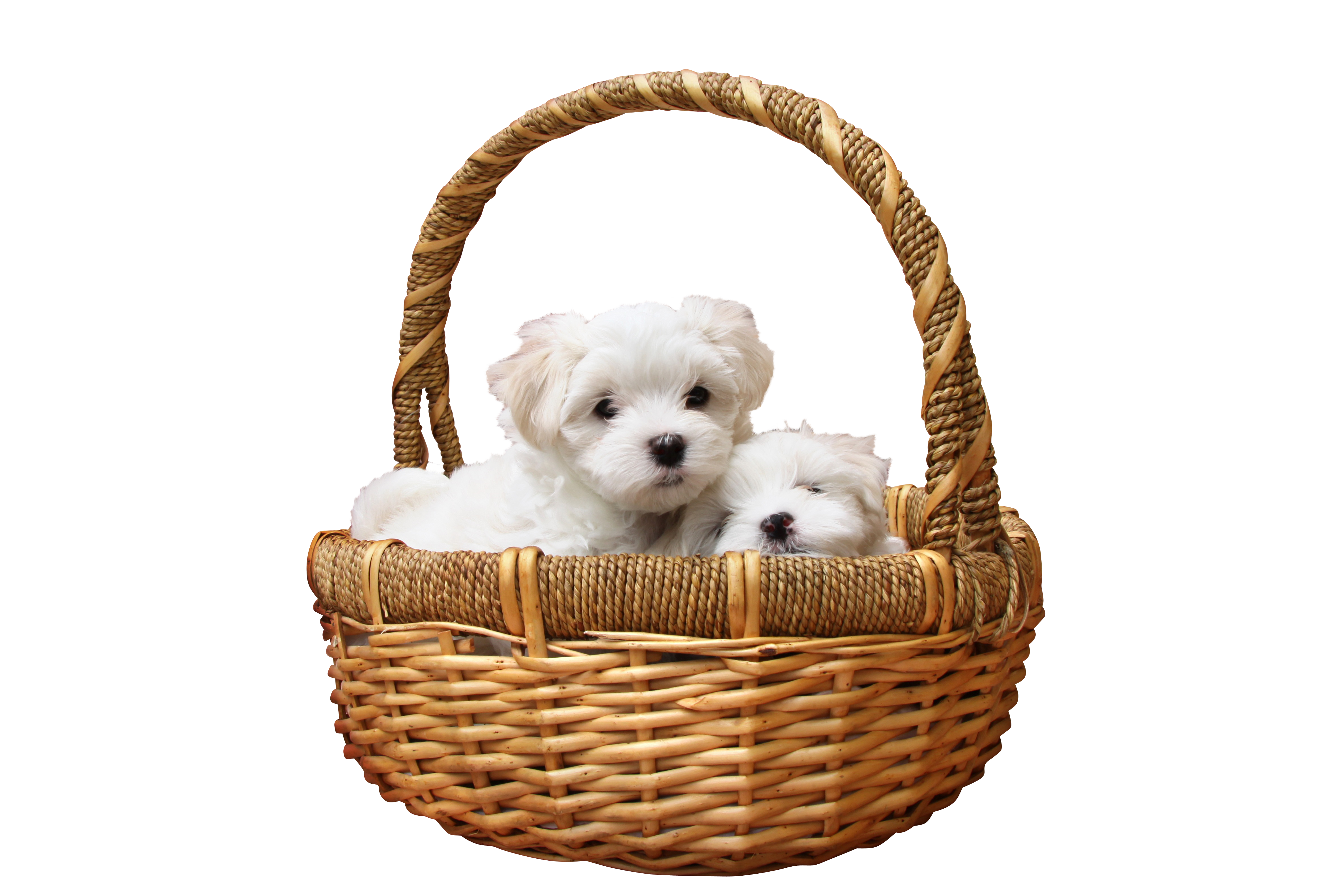 dog-1027549_Clip