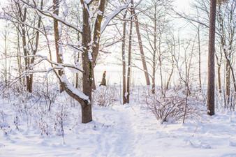 Cossyimages Winter (4).jpg