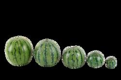 watermelon-715608_Clip