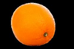 citrus-2791_Clip