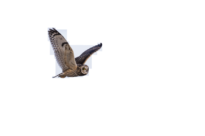 owl-1218685_Clip
