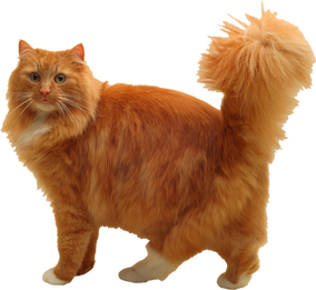 Garfield  (3).png