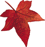 100710_red_maple_leaf.png