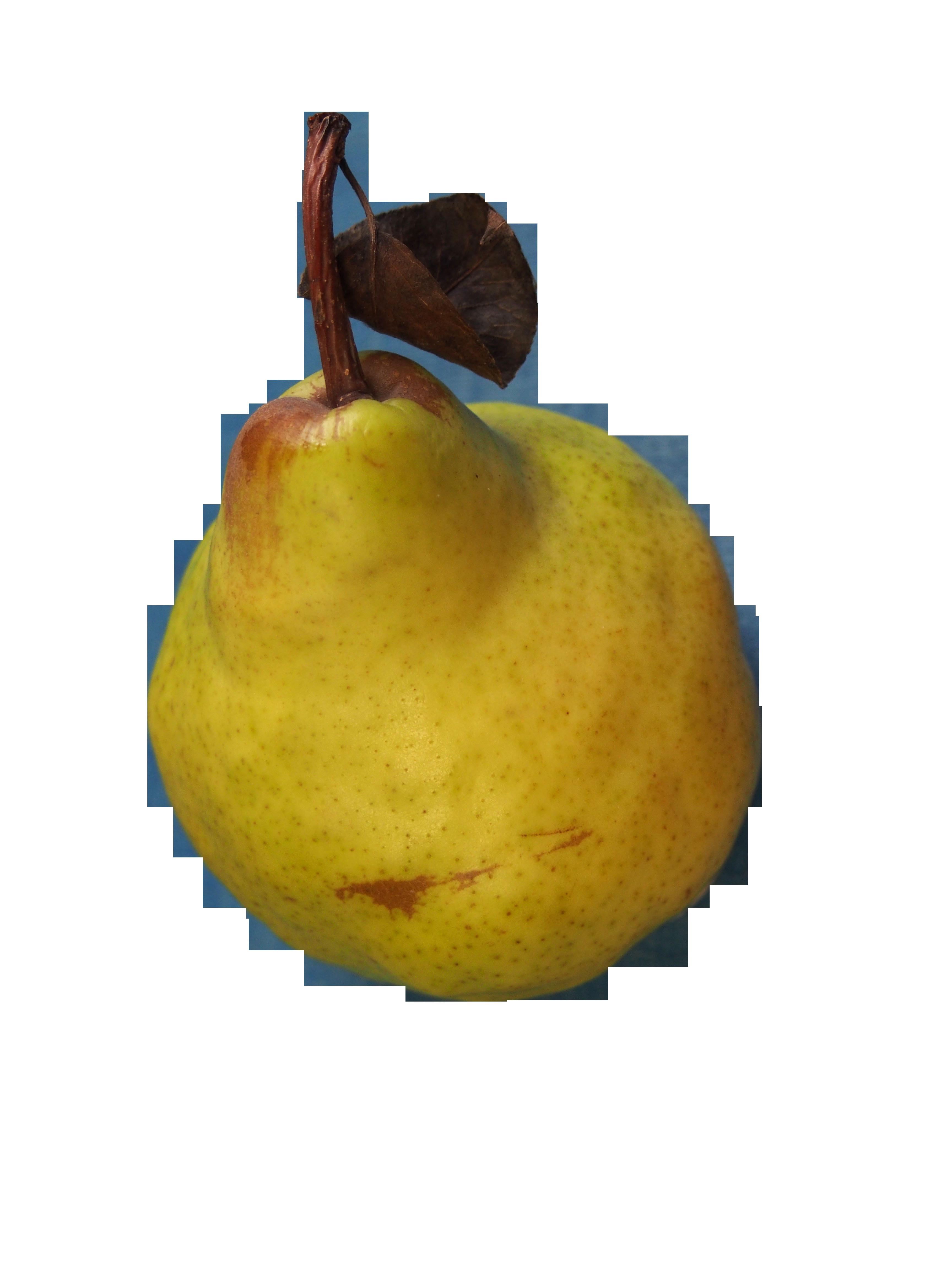 pear-777545_Clip