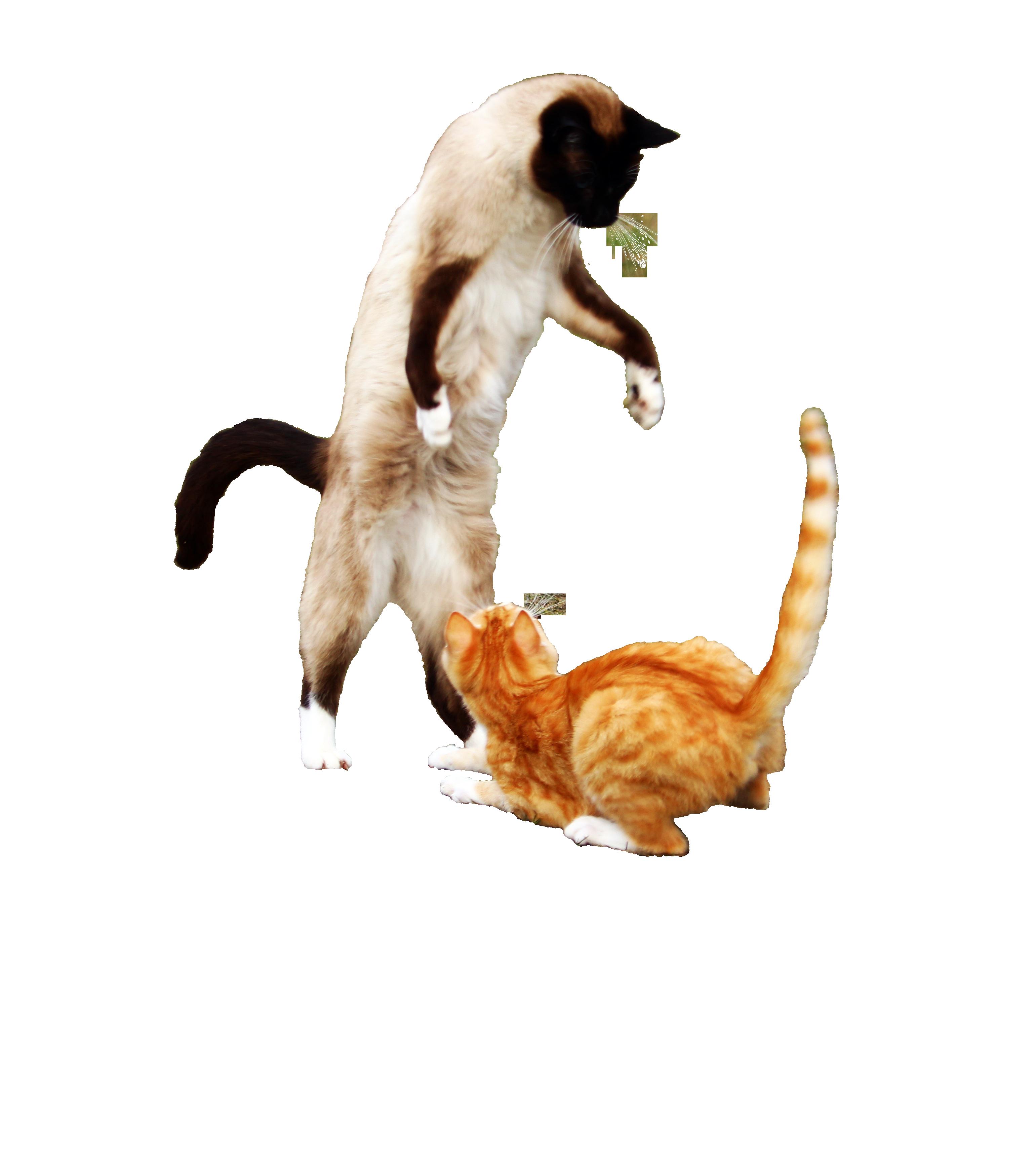 cat-1234941_Clip