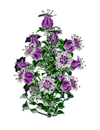 flower-1893207__340.png